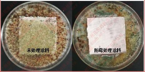 涂料防霉剂 AEM5700-T50